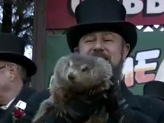 groundhog doesn't see his shadow